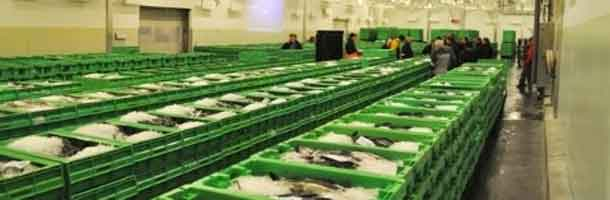 Danish fishing ports prosper